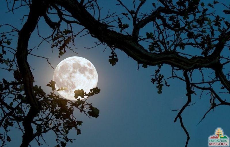 Resultado de imagem para imagens de lua cheia na floresta